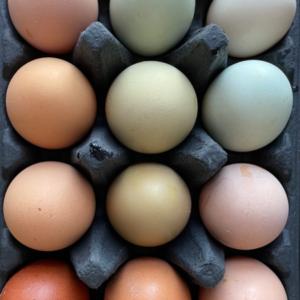 rainbow eggs